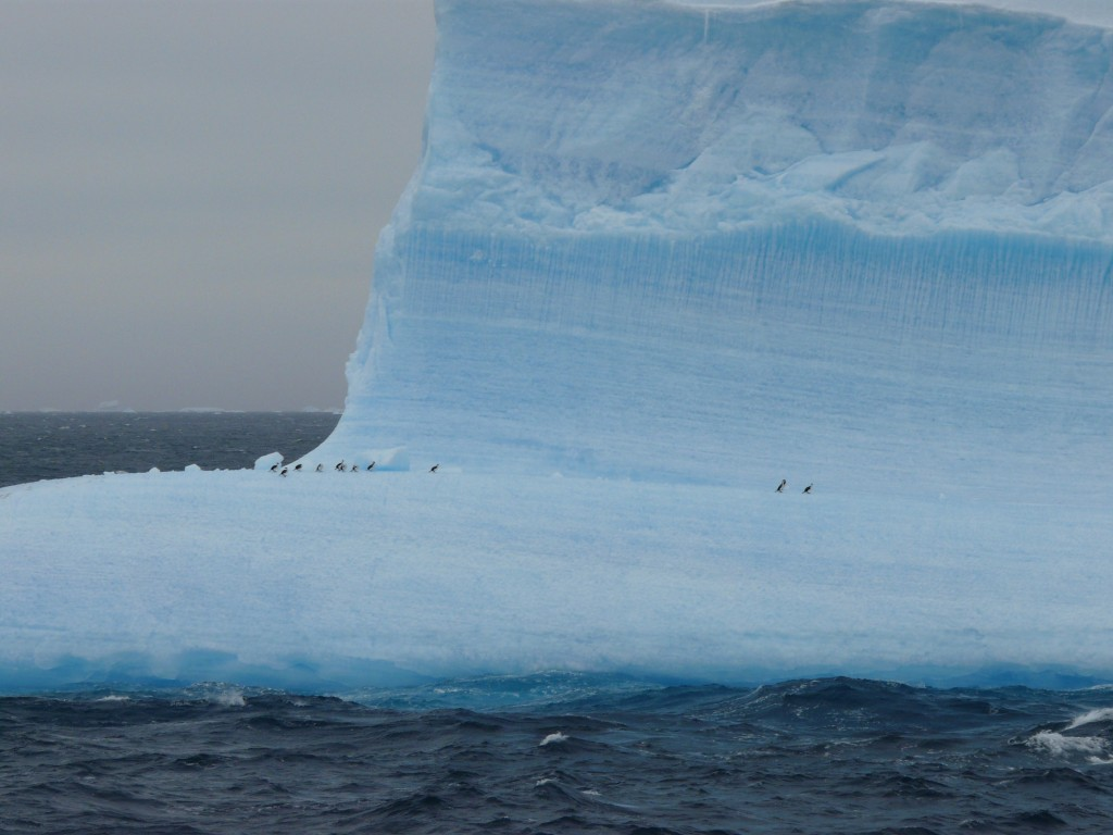travel to Antarctica - iceberg with tiny birds on it