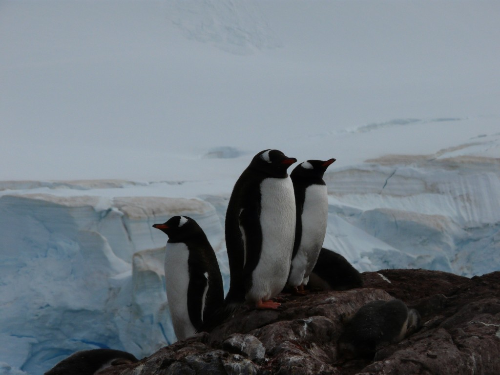 travel to Antarctica - penguins
