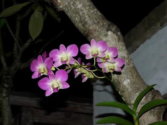 Seminyak, Bali, Indonesia