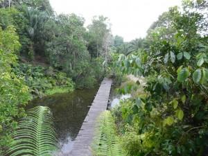rain forest lodge Malaysian Borneo