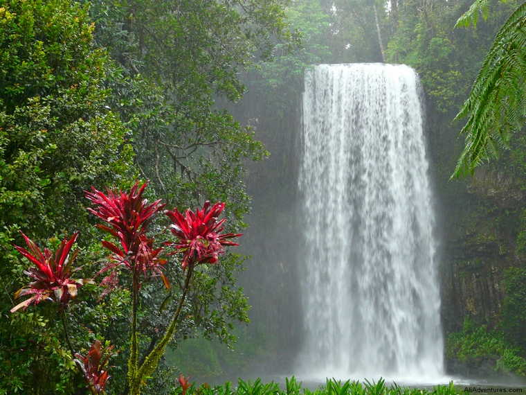 round the world trip taking a break - Millaa Millaa Falls, Australia