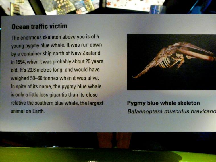 best museum in Wellington, New Zealand - Te Papa Museum