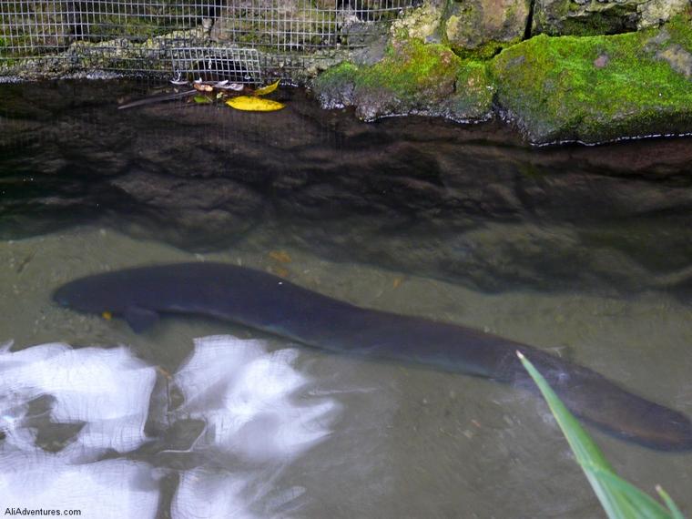saving kiwis in Rotorua - Rainbow Springs Park