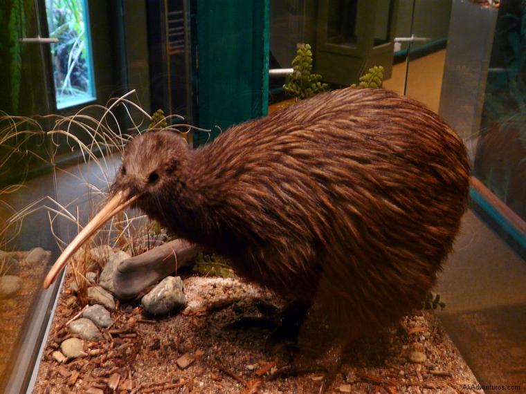 saving kiwis in Rotorua - Rainbow Springs Park - kiwi tour