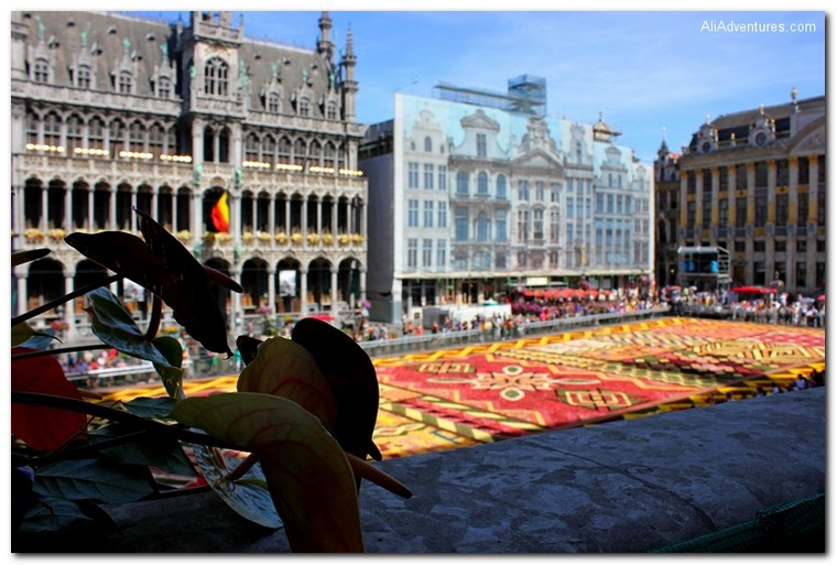 Brussels, Belgium flower carpet
