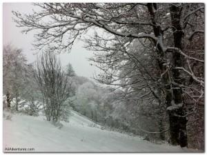 Freiburg's Winter Wonderland