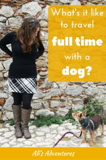 non-traditional interviews - full-time travel with a dog