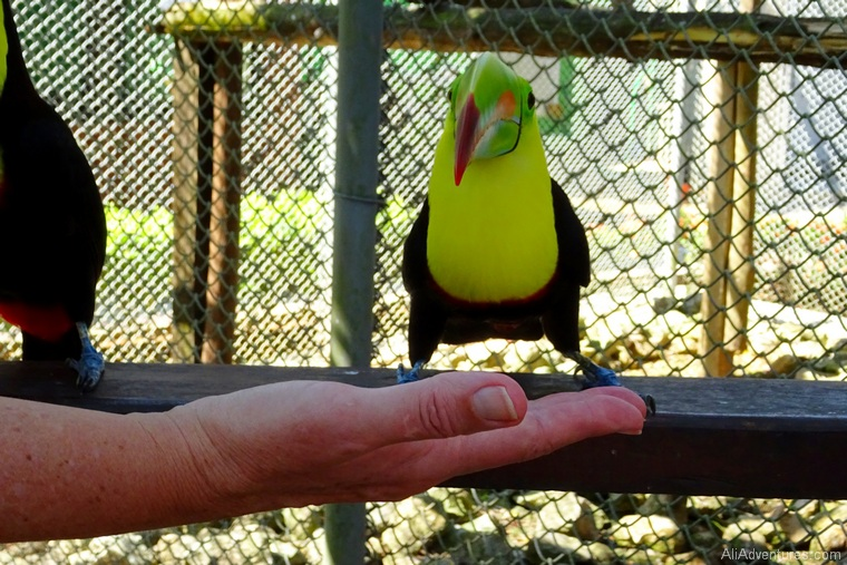 how to spend 4 days in Panama city - feeding birds at the zoo