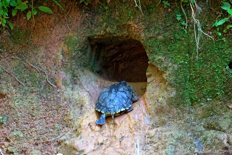 what to do in Panama City - turtle