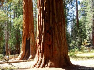 1 Day in Sequoia National Park