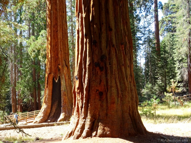 what to do in Sequoia National Park