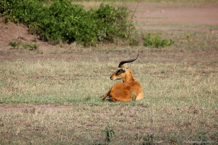 Uganda safari Queen Elizabeth park north