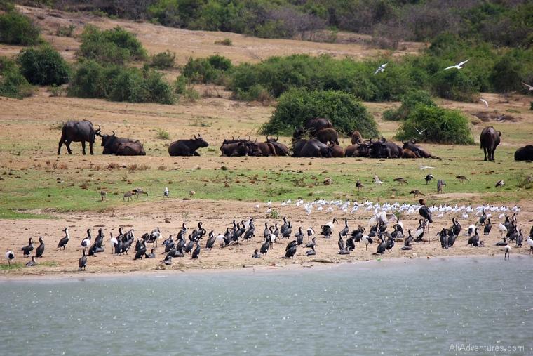 safari in Uganda boat trip