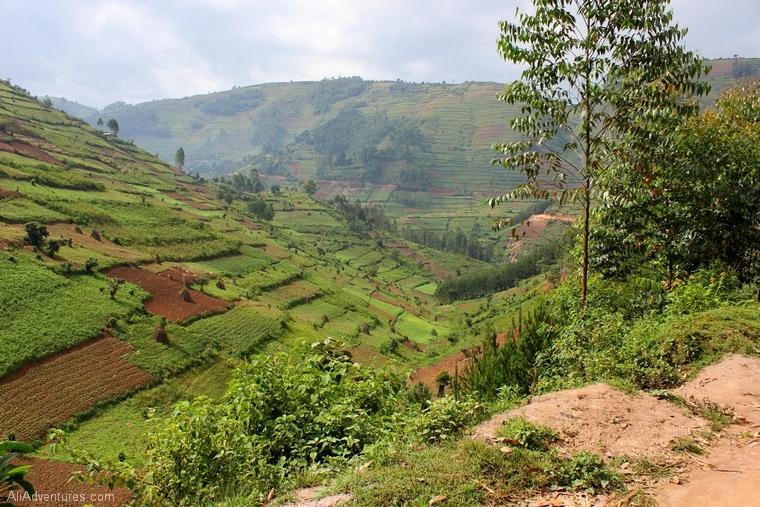Uganda safari Bwindi Impenetrable Forest