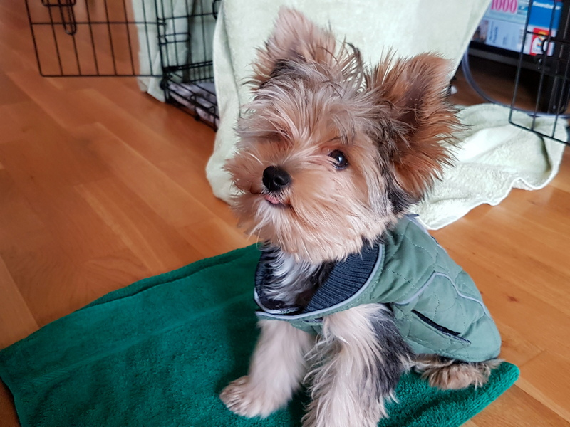 Zelda 4 months old in jacket