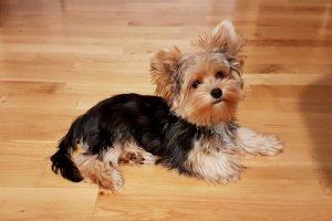 We Got a Puppy: Meet Zelda!